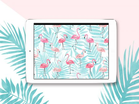 wallpaper-flamingo-mellemimijolie